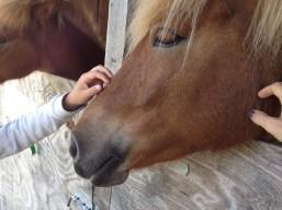 Sødt barn & sød hest = det skal da på Facebook!